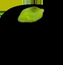 megamasjid h3 leaf 2